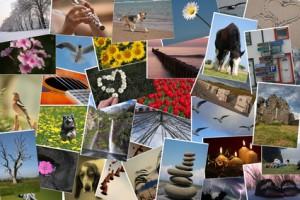 Online-Bestellung von Fotoabzügen – wie funktioniert's und wer liefert die beste Qualität?